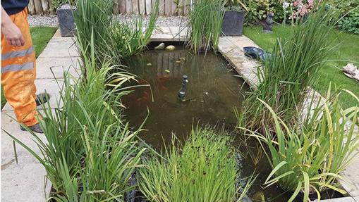 Pond Maintenance (Large, Fish, Garden Pond Maintenance ...